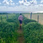 Writer's Retreat Haiku Hawaii